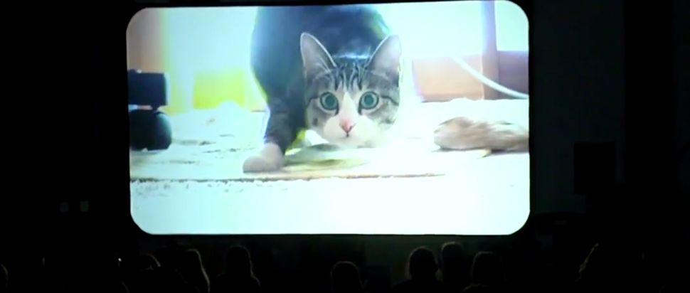 Cat Video Festival still