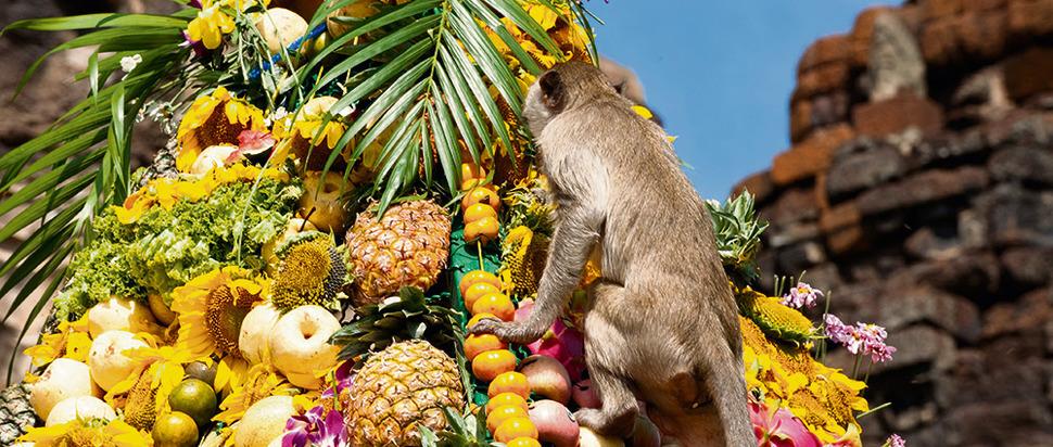 Monkey Festival, Thailand
