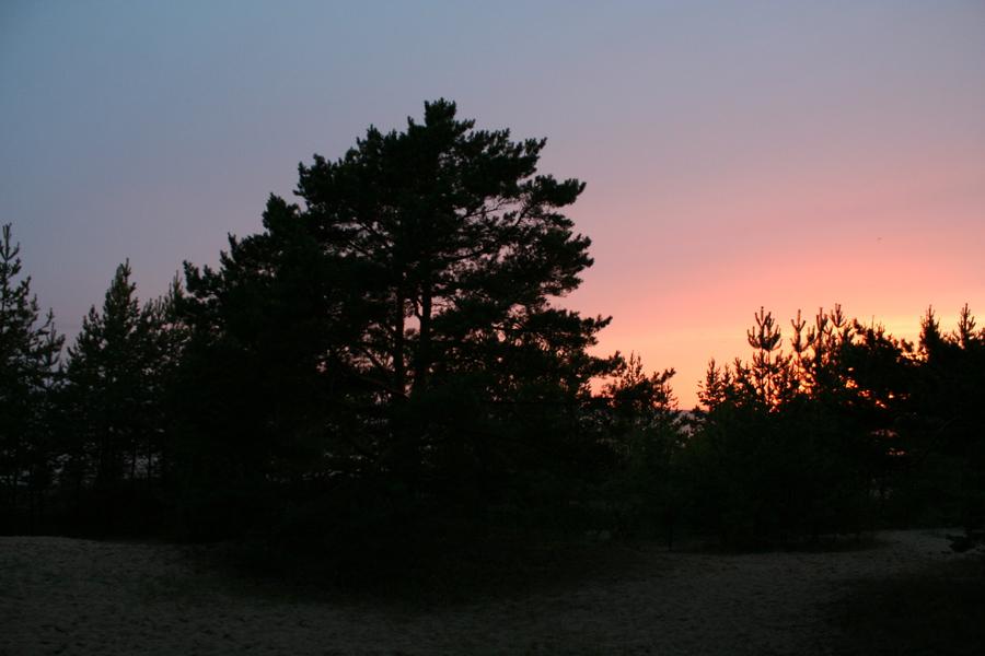 Positivus woods sunset