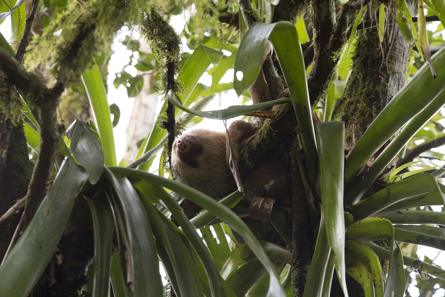 Costa Rica Airbnb Sloth