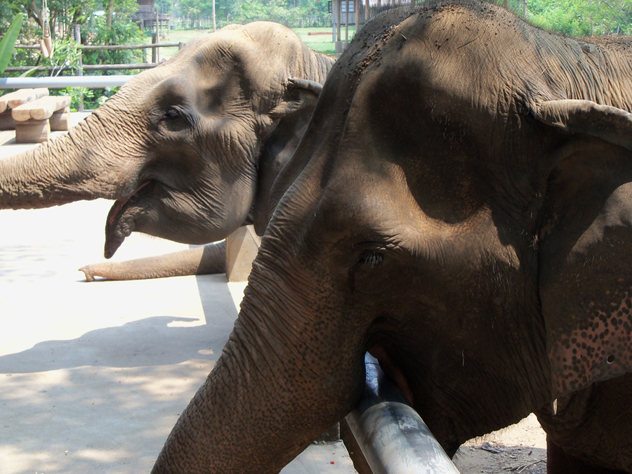 Mae Perm and Jokia at Elephant Nature Park