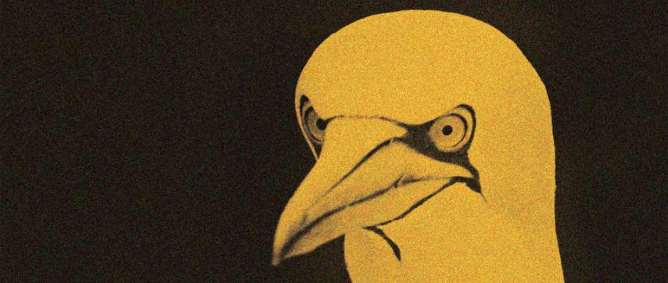 Erland Cooper – Solan Goose