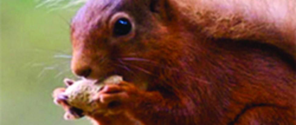 Squirrel Party